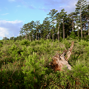 Texas A&M Forest Service launches online tools to assist Texas landowners